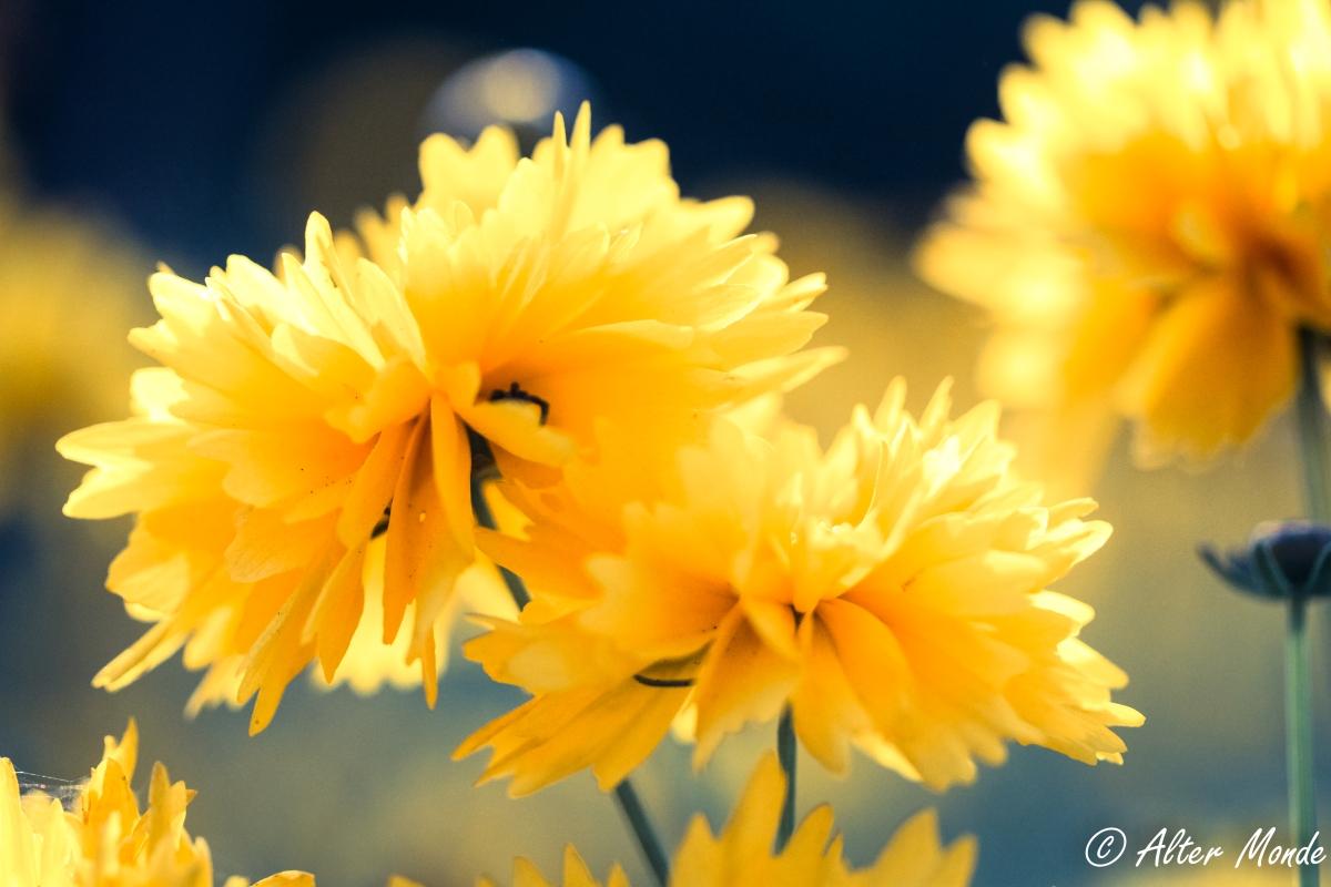 Oda a unas flores amarillas